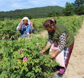 Лоша реколта от розобера отчита и бизнес дамата Веселина Зумпалова-Ралчева