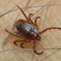 Нов случай на марсилска треска е установен в област Пазарджик