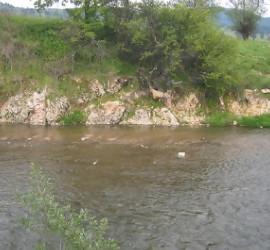 Провериха сигнал за мъртва риба в река Луда Яна
