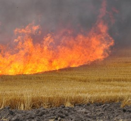От началото на годината на територията на област Пазарджик са възникнали 287 пожара на сухи треви