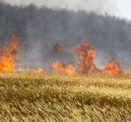 Солидни глоби за палене на растителни отпадъци, стърнища и огън