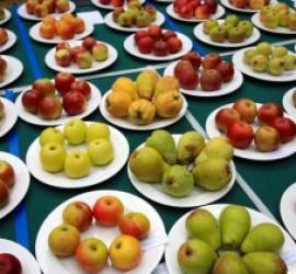 """Над 456 000 деца ще получават плодове и зеленчуци по схема """"Училищен плод"""""""