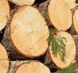 Заловиха панагюрец с 3 кубика незаконно добити дърва за огрев
