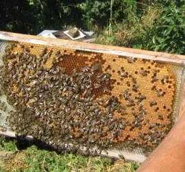 Пчеларите получават кредит за над 500 000 лева