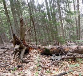 Засилен контрол във връзка с наложената забрана за изсичане на гори