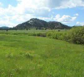 Свободни пасища на територията на общината има в Панагюрище и Елшица