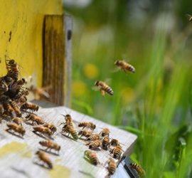 От 5 юни пчеларите подават заявления за плащане на изпълнени договори от НПП 2017 – 2019