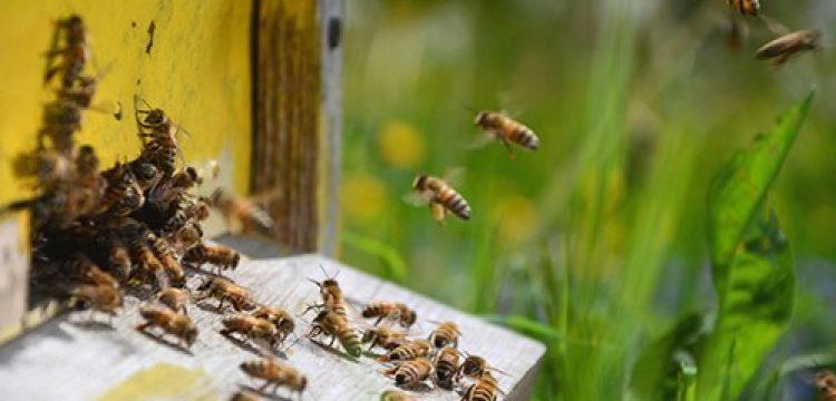 Важно – за собствениците на пчели и пчелни семейства