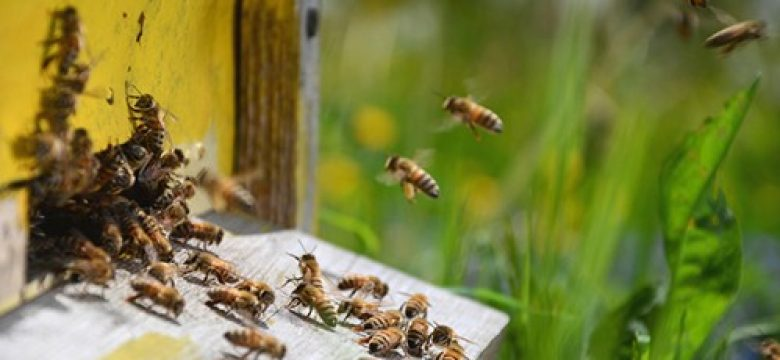 Пчеларите могат да подават заявление за плащане по Националната програма по пчеларство за 2021 г. до 16 август