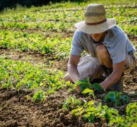 От днес започва прием по подмерки COVID 1 и COVID 2. Заявления се подават в общинските служби по земеделие