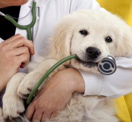 Международен ден на ветеринаря