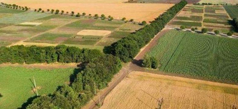 Община Панагюрище публикува протокол за разпределение на пасищата и ливадите