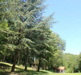 Половината от площта на общинските гори е съсредоточена в землището на село Баня