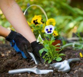 Отбелязваме Деня на градинаря в България