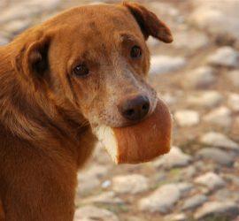 Броят бездомните кучета веднъж на 2 години