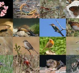 Международен ден на биологичното разнообразие