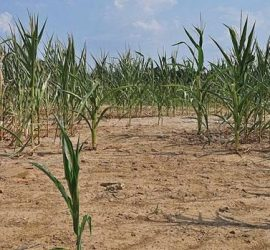 Световен ден за борба със сушата