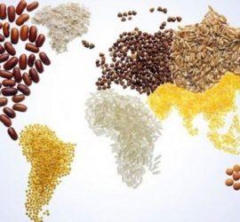 16 октомври е Световен ден на прехраната