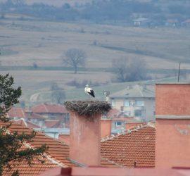 """Пристигна щъркелът, обитаващ гнездото на СУ """"Нешо Бончев"""""""