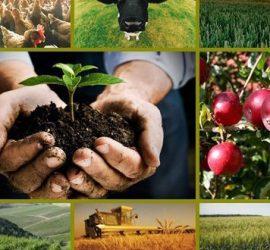 Над 2 млрд. лв. са изплатени по Програмата за развитие на селските райони и директни плащания през 2018 г.