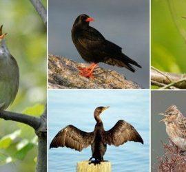 Днес отбелязваме Европейския ден на птиците