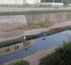 Щъркелите в Панагюрище потърсиха прохлада в реката