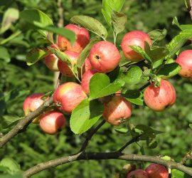 От днес започва втори прием по de minimis за плодове, зеленчуци, маслодайна роза и винени лозя