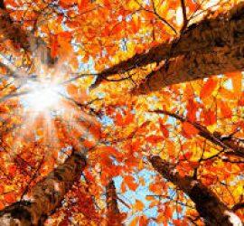 Ето какво време прогнозират за ноември