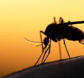 Първи за годината случай на вируса Западнонилска треска е регистриран в Пазарджишко през септември