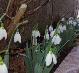 Времето през почивните дни ще се задържи сравнително топло за февруари