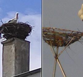 """Завърна се щъркелът, обитаващ гнездото ОУ """"Проф. Марин Дринов"""""""