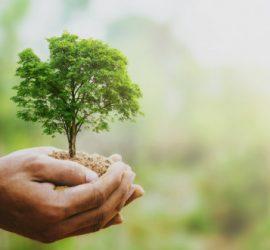 И в Елшица засаждат дръвчета, получени чрез инициативатаГората.бг