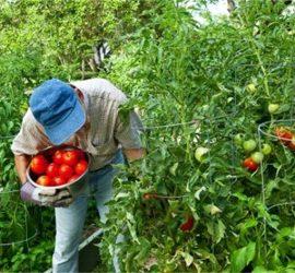 ДФЗ проверява на терен фермерите за Кампания 2021