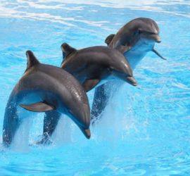 11 август 1984: Варненският делфинариум е открит за посетители
