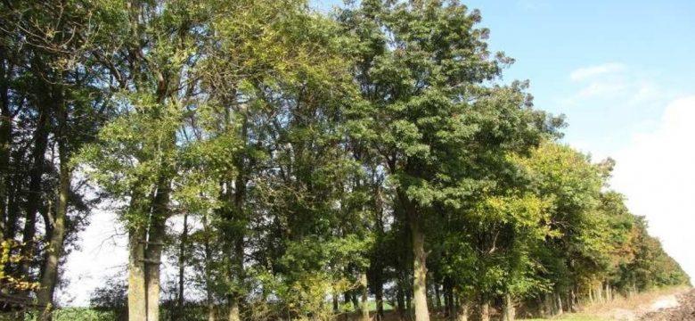 Агенцията по горите подновява кампанията за защита на дърветата в земеделски земи